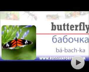 insects in russian